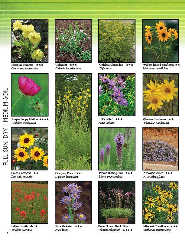 Photo Gallery Missouri Wildflowers Nursery In