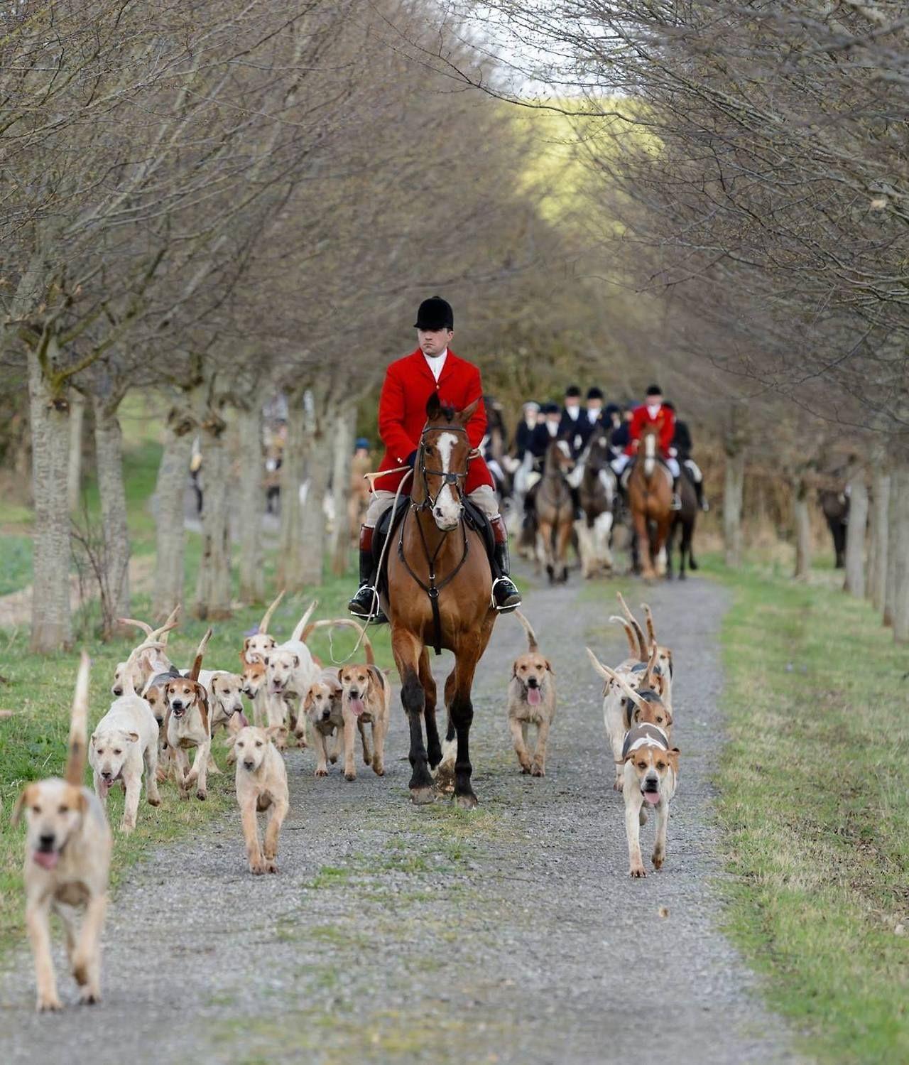Fox Hunt Hunting dogs, Fox hunting, Hunting