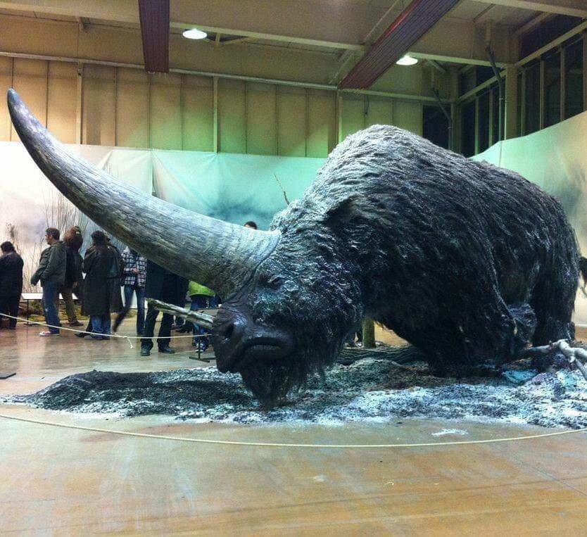 "This is an Elasmotherium a big hairy ""unicorn"" that went"