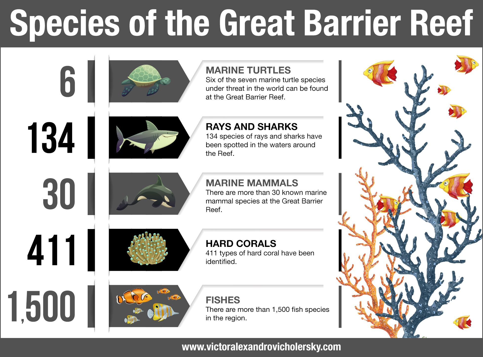 Species of the great barrier reef great barrier reef