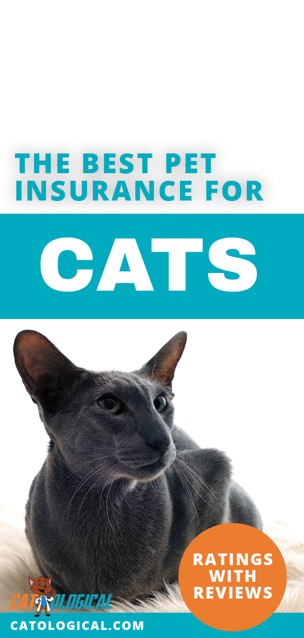 Cat Insurance The Best Pet Insurance For Cats With Reviews Ratings Best Pet Insurance Cat Care Cat Insurance