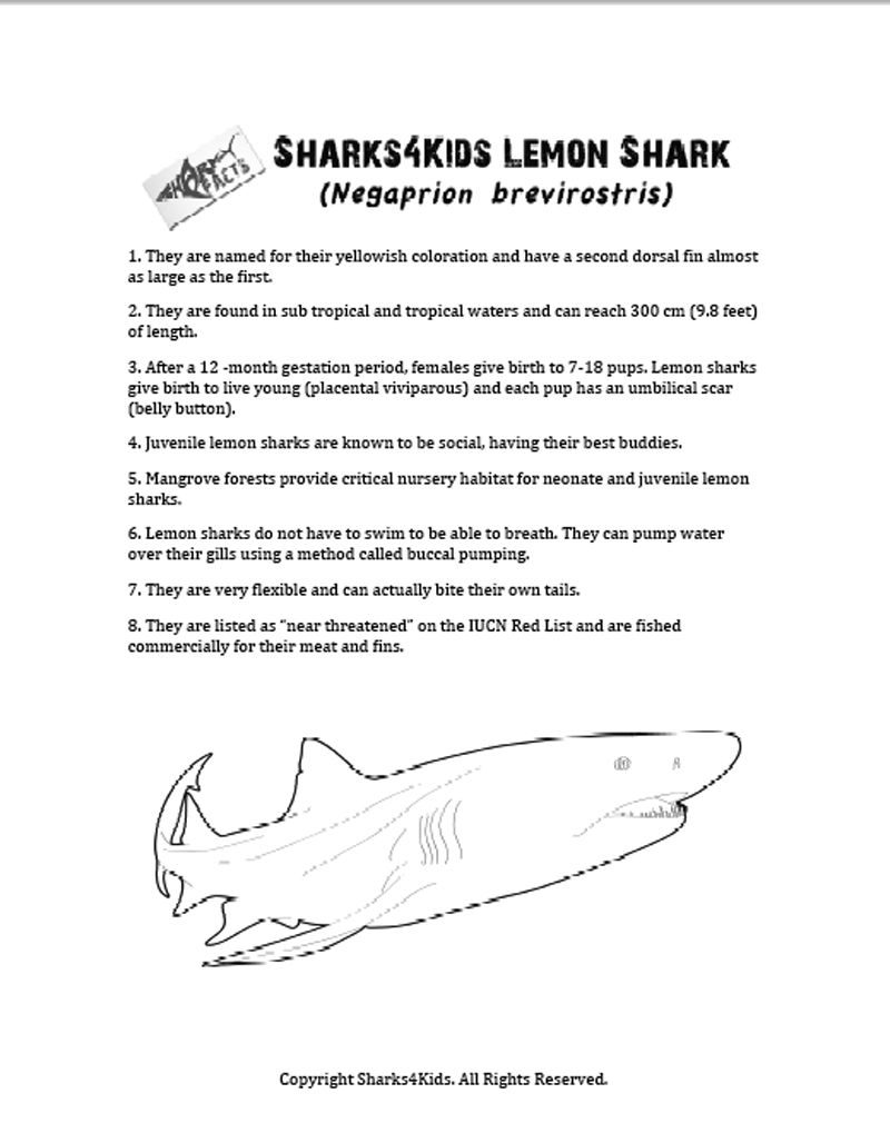 Lemon Shark Coloring Sheet With Shark Facts Shark Facts Shark