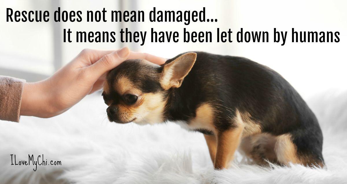 20 Chihuahua Memes That Will Make You Cry Chihuahua Chihuahua