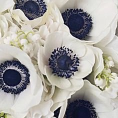 White Poppy Navy Blue Center Google Search Anemone Wedding Flowers Beautiful Flowers