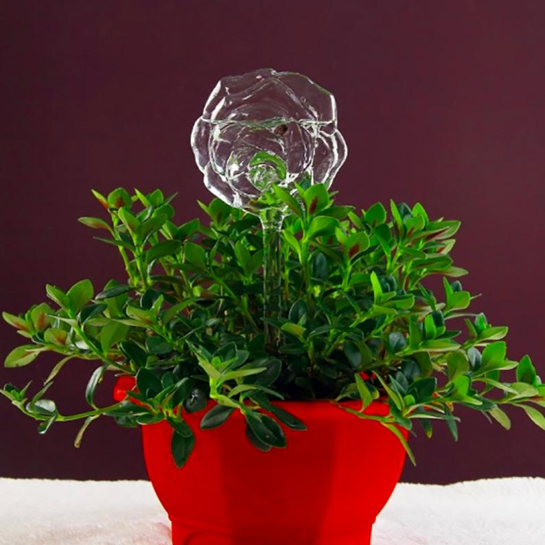 Rose - Self Watering Houseplant Tool #selfwatering