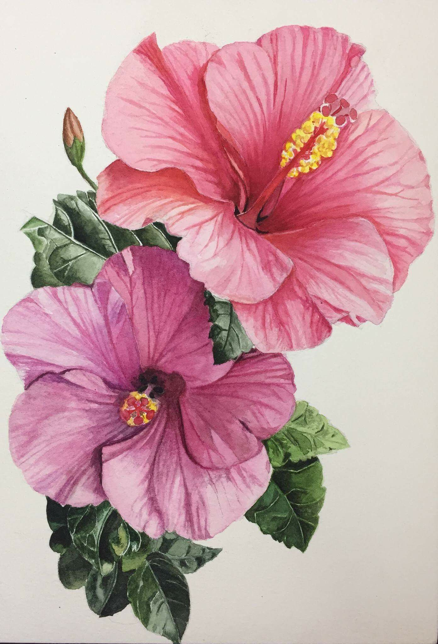 Hibiscus floral painting reference pinterest for Pinterest fiori