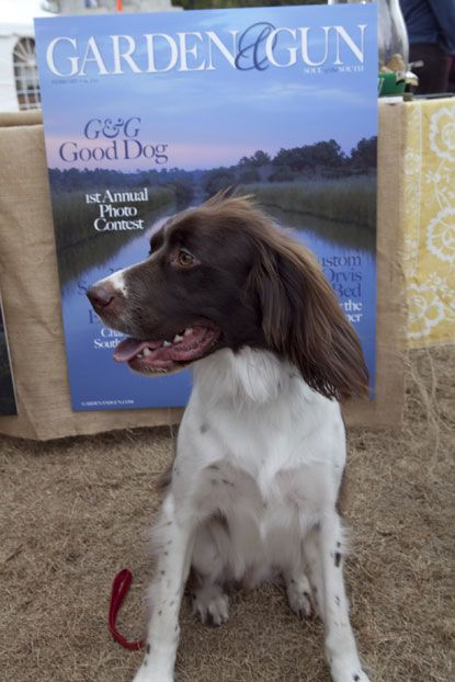 G G Good Dog Photo Contest At Sewe Dog Photo Contest Best Dog Photos Best Dogs