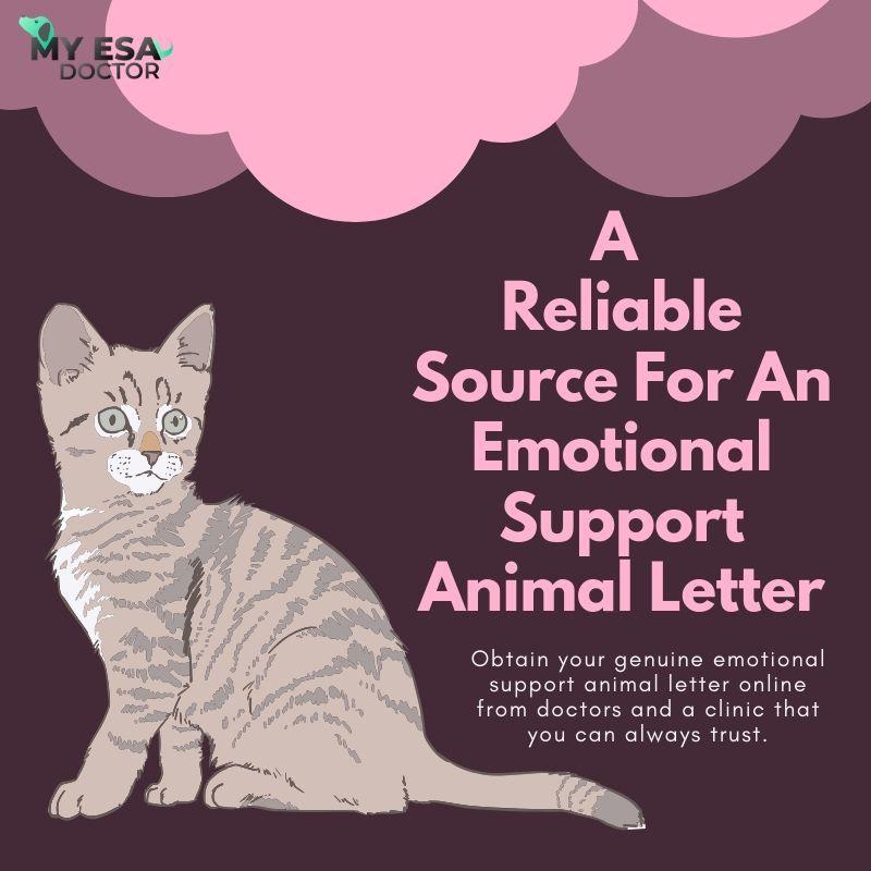 Get An Esa Letter Online For Your Emotional Support Animals Emotional Support Animal Support Animal Emotional Support