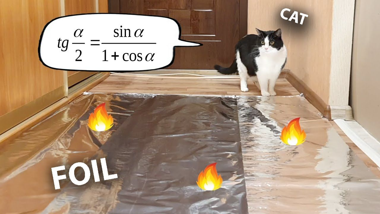Do cats walk on foil an experiment youtube cats cat