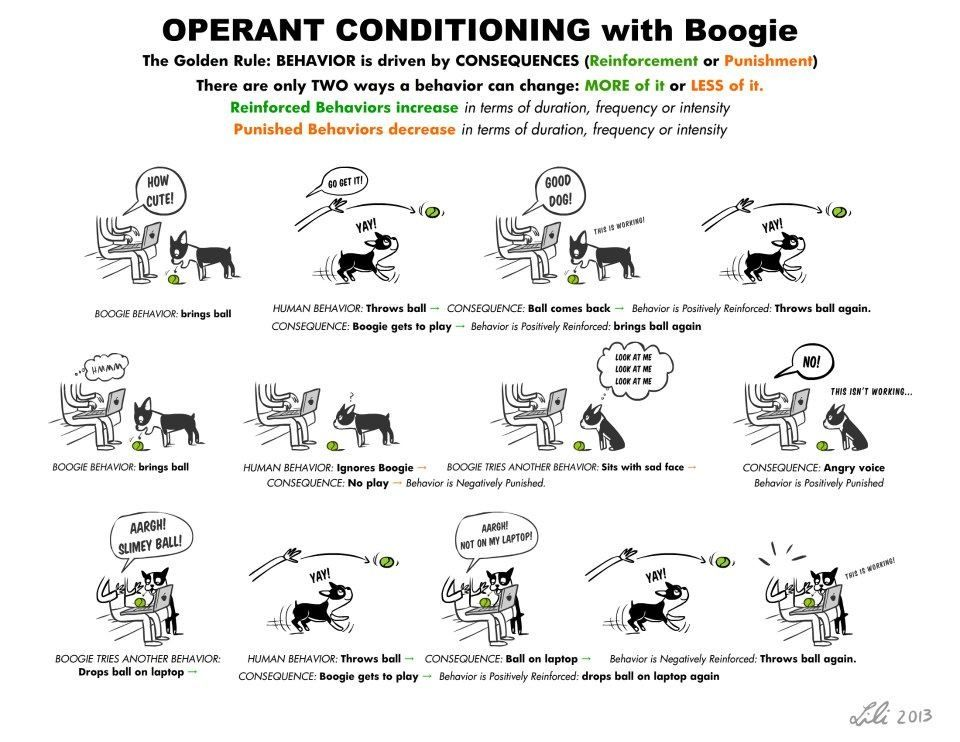 Operant conditioning Dog training theory, tips, articles - dog trainer sample resume