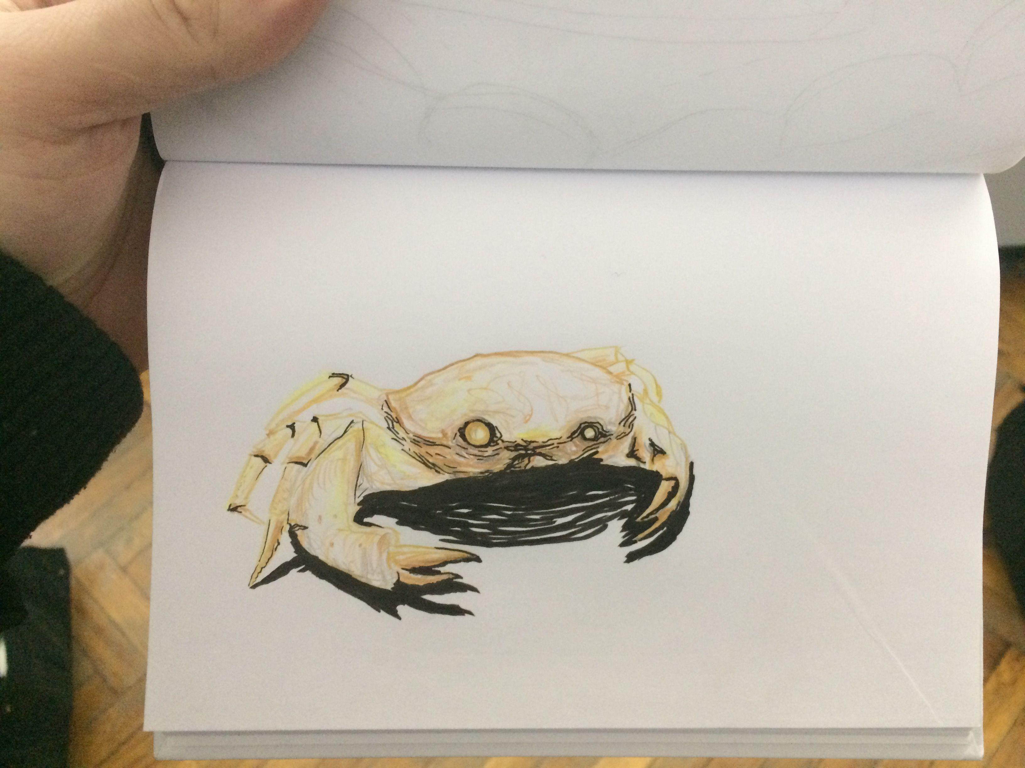 Crab color pencils sketch my drawings 2017 color pencil sketch