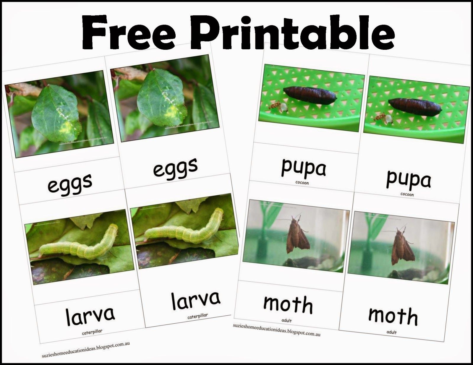 Life Cycle Of A Moth Free Printables Life Cycles Free Printables Fun Education [ 1235 x 1600 Pixel ]