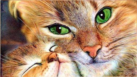 Фото Мама - кошка и котенок, ву VianaArts (© zmeiy ...