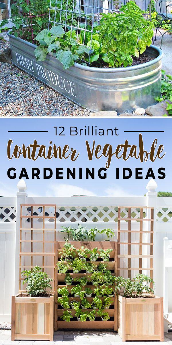 12 Brilliant Container Vegetable Gardening Ideas is part of Container gardening vegetables, Container vegetables, Growing vegetables, Diy container gardening, Growing vegetables in pots, Patio garden - Want to grow your own healthy vegetables  Then these 12 brilliant container vegetable gardening ideas are just what you need!