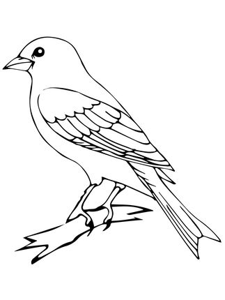 Perched Canary Bird Coloring Page Bird Coloring Pages Bird