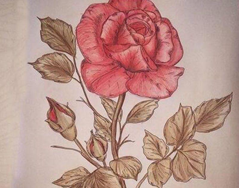 13 Gambar Bunga Pensil Warna Pada Dasarnya Sketsa Ini Digunakan Untuk Sebagai Sebuah Kerangka Dalam Karya Seni Bukan Hanya U Di 2020 Lukisan Bunga Bunga Pensil Warna