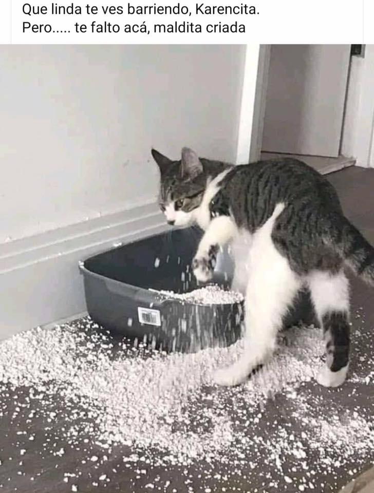 Terrible Hd Pagina 4 En 2020 Memes Graciosos De Animales Meme Gato Memes De Animales Divertidos