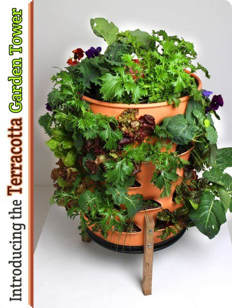 Vermicomposting: A Beginner\'s Guide   Gardens, Composting and Garden ...