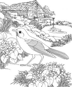 Robin Walks In Garden Bird Coloring Pages Coloring Pages
