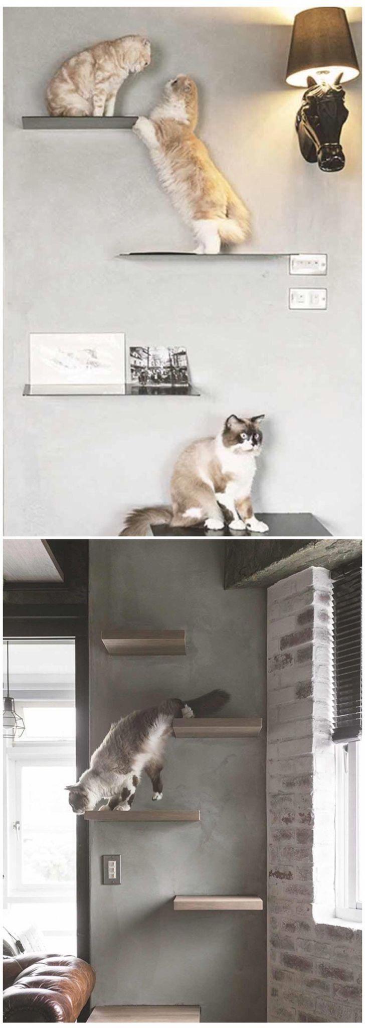 shelf for cats shelvesforcats siberian cats for sale pinterest rh pinterest com