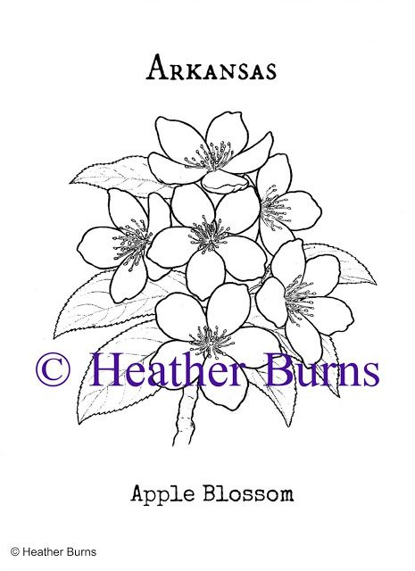 Arkansas Apple Blossom Coloring Page In 2020 Coloring Pages