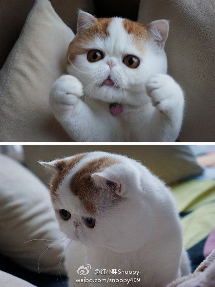 Can T Get Enough Of Snoopy Cat S Microblog Cute Animals Snoopy