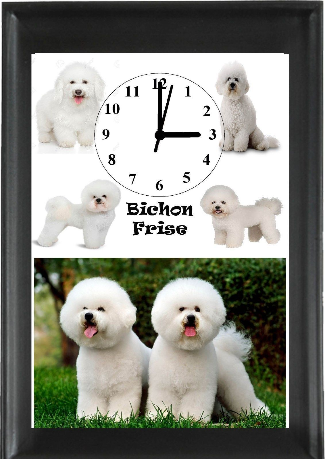 #Bichon frise dog  #clock/picture  #animals wall clock personalised free,  View more on the LINK: 	http://www.zeppy.io/product/gb/2/282098801609/