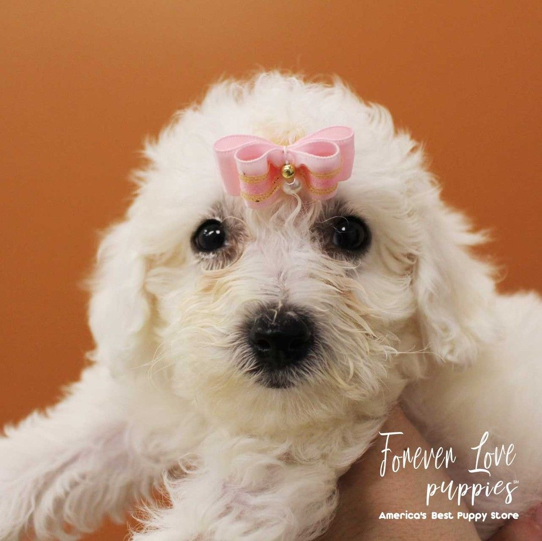 You Re Invited To A Puppy Party Forever Love Puppies Welcomes You