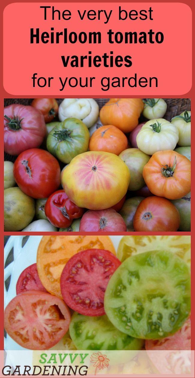 Heirloom Tomato Varieties For Your Garden The Best Of 400 x 300