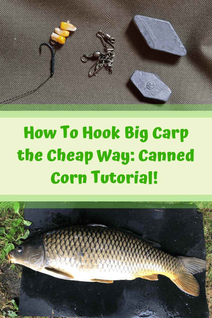 How To Hook Big Carp Cheap Way Canned Corn Tutorial Carp Fishing Tips Carp Carp Fishing Rigs