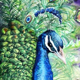 Peacock II -Original watercolors painting