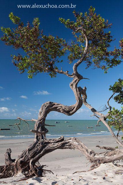 Praia da Barrinha, Acarau, Ceará - BRASIL
