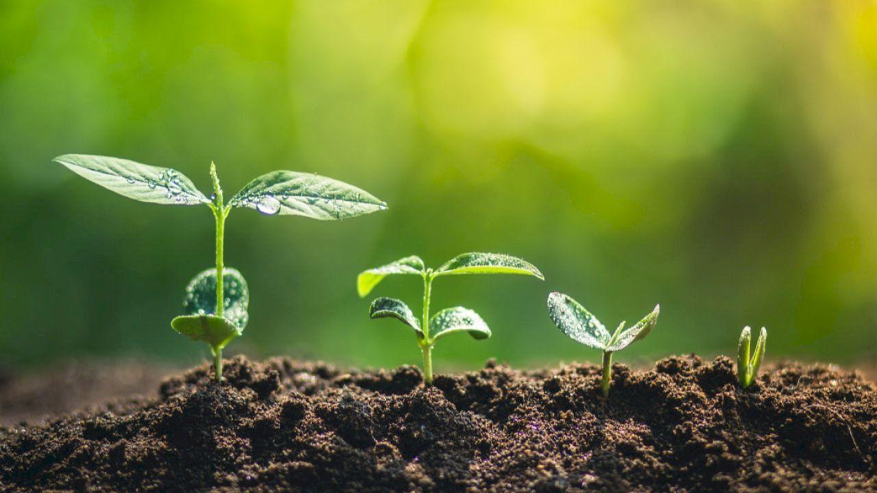 مراحل نمو الشجرة Plants Tree Growth Environment