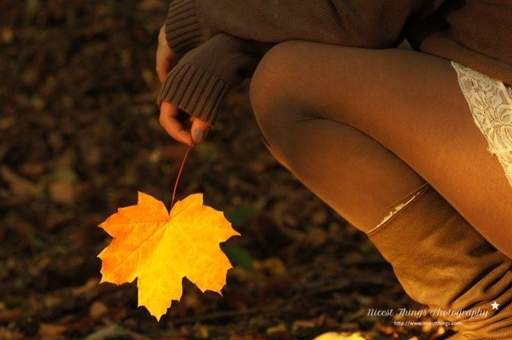 autumn wood leaves golden october indian summer
