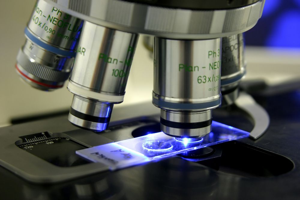 Human Tissue Lab Practical Exams | Anatomy physiology | Pinterest ...