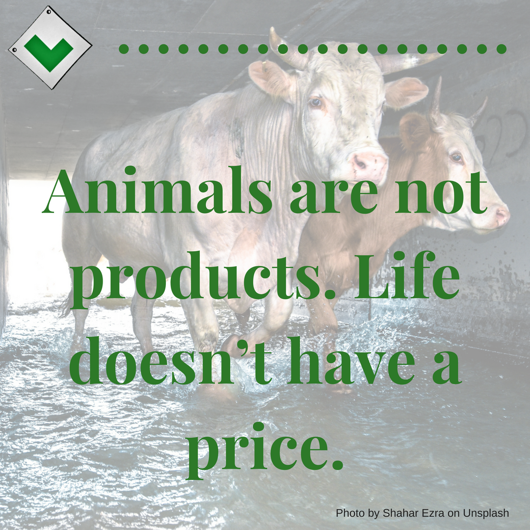 That's why it makes sense to go vegan. Need help? You have our support. #animalcruelty #vegetarian #dairyfree #veggie #plantbased #animalrights #vegandiet #quotes #veganquotes #compassion #friendsnotfood #vegetarianquotes
