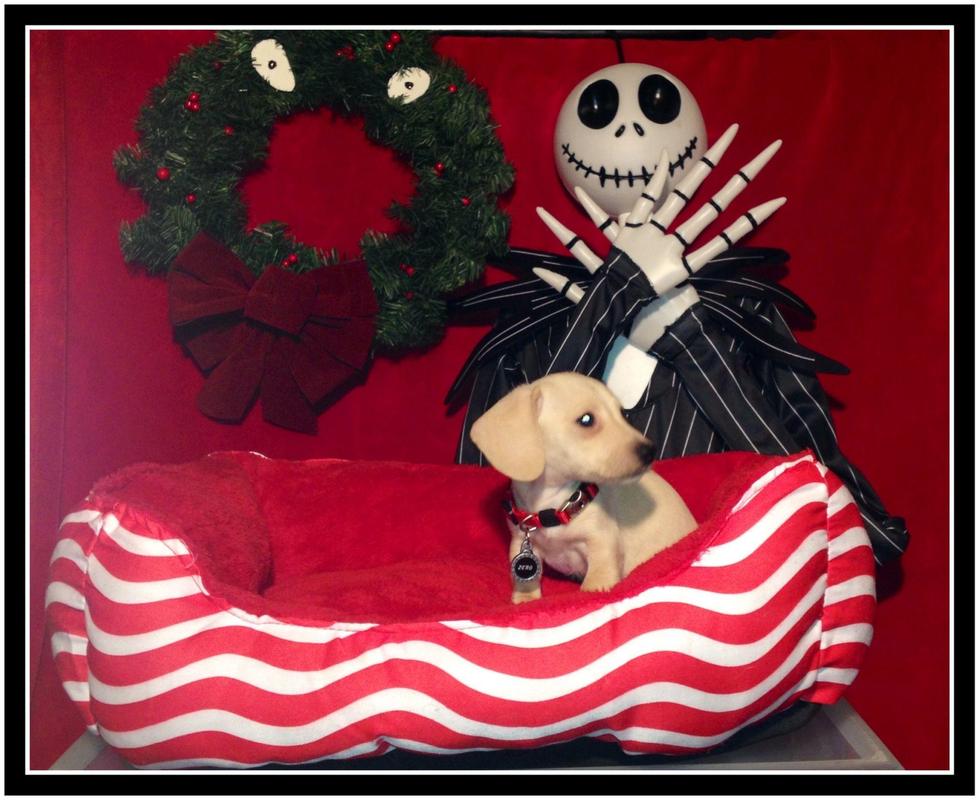 Nightmare before Christmas photo shoot timburton