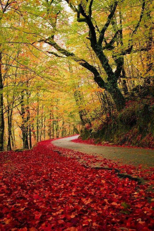 Autumn Road, Geres, Portugal