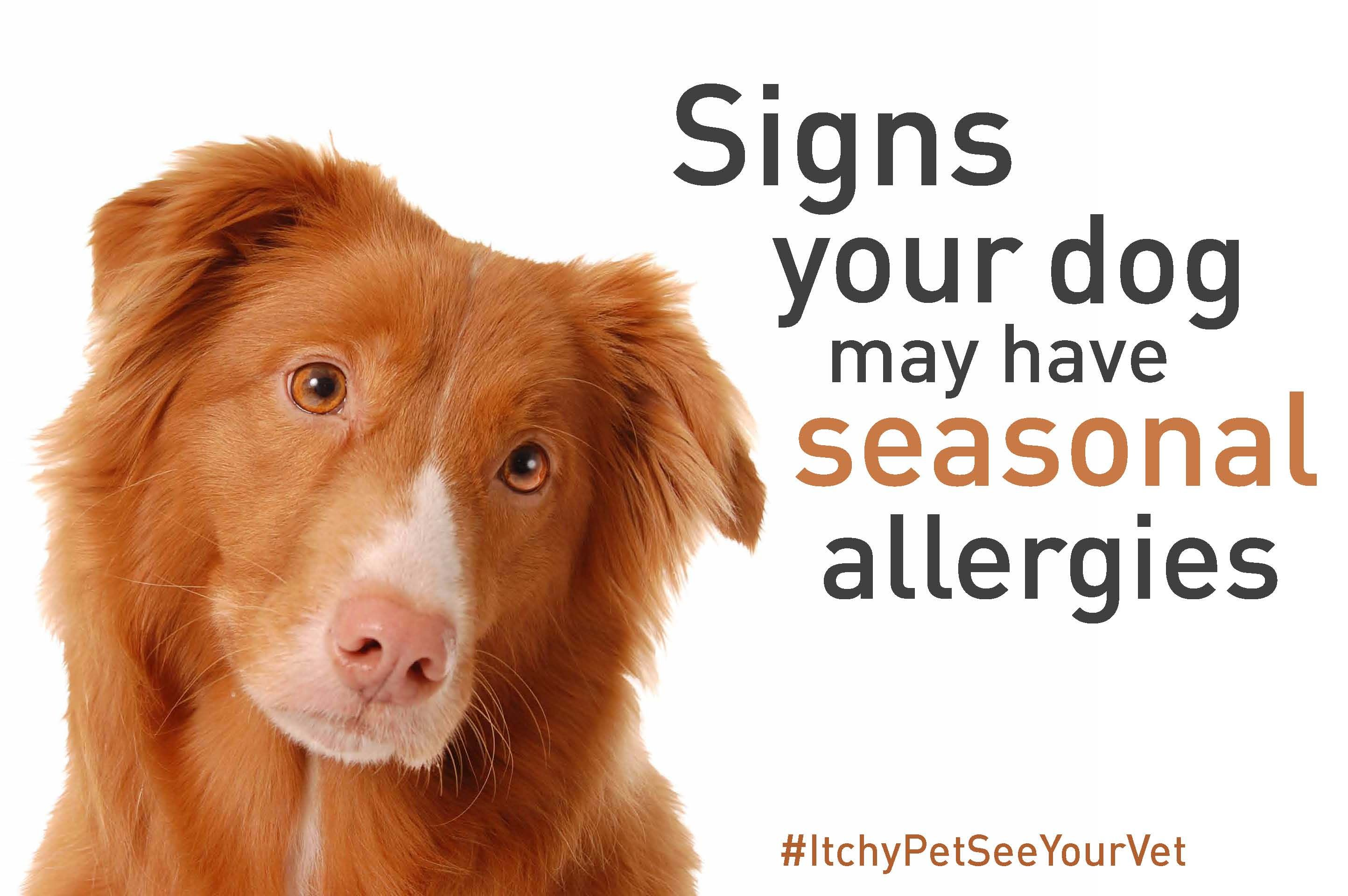 Does Your Dog Have Seasonal Environmental Allergies
