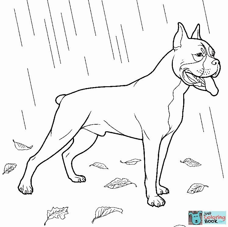 Boxer Dog Coloring Page Dog Coloring Page Coloring Pages Dog