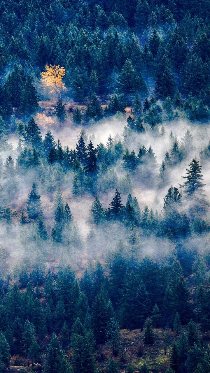 Download Wallpaper 720x1280 Trees Fog Top View Samsung Galaxy S3