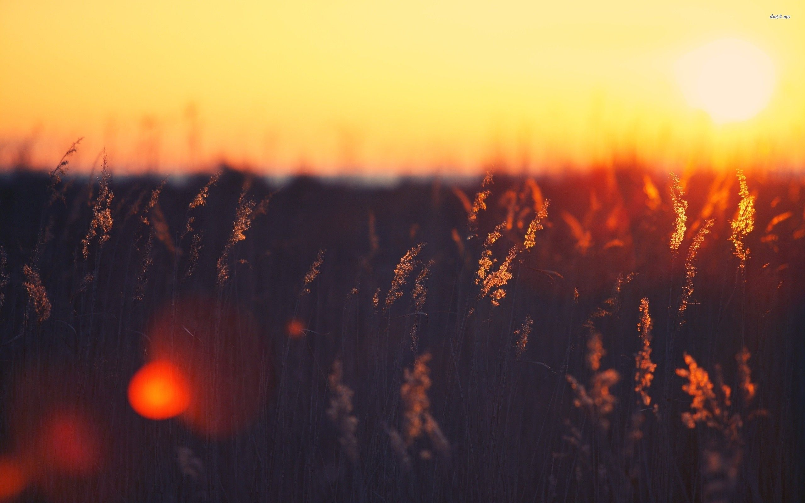 Vintage Sunset Graphy | Art | Pinterest | Projects ...