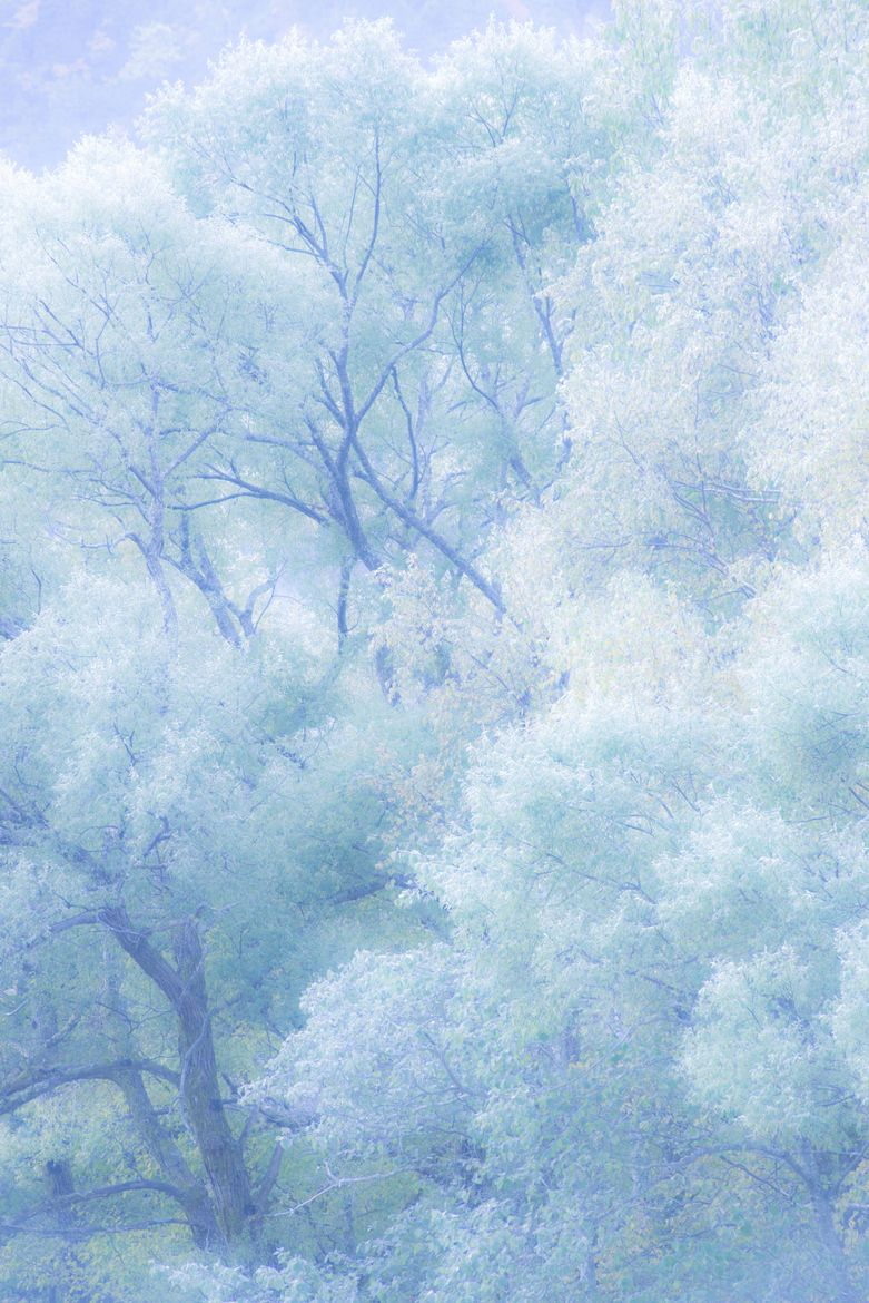 Pin By Cindy Webster On Frost Baby Blue Aesthetic Blue Aesthetic Pastel Blue Aesthetic Icy blue aesthetic baby blue wallpaper