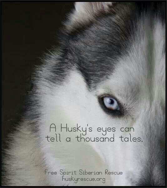 So True Husky Siberian Husky Husky Quotes