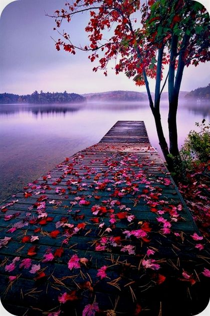 Tips And Tricks For Taking Memorable Pictures Nature Pictures Beautiful Nature Wallpaper Nature Photography