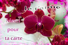 Cartes De Remerciements Gratuites Joliecarte Carte Remerciement Carte Jolie Carte Virtuelle