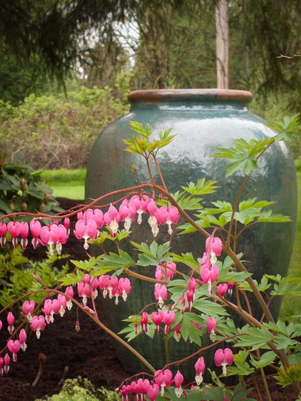 Bleeding Heart Dicentra Spectabilis Zones 4 To 8 Prefers Moist Fertile Soil But Is Surprisingly Drought Tolerant In Plants Shade Flowers Woodland Garden