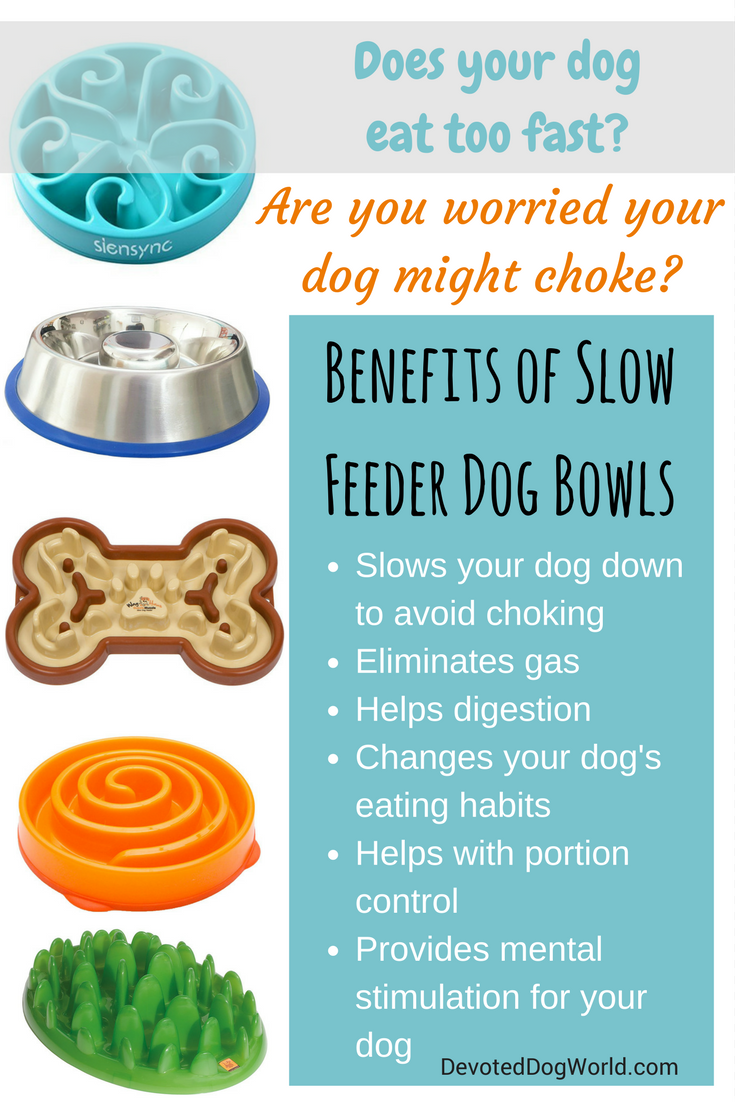 dog slow the best feeder choose tips bowl how bowls to nolongerwild