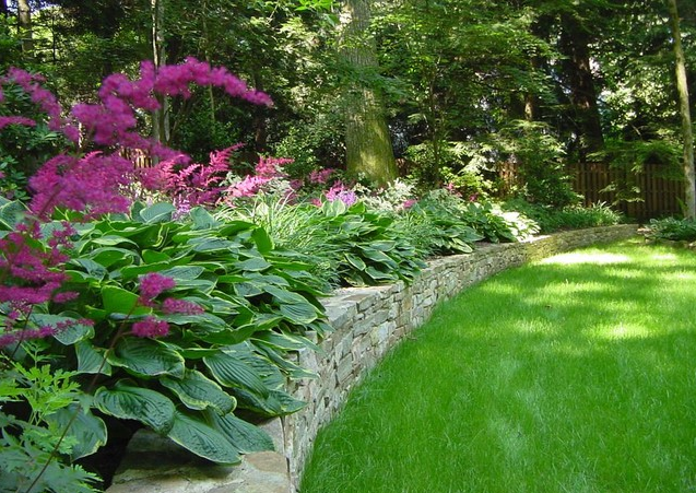 Shade garden: ly pairing of astilbe and hosta. I the wall ... on hosta and daylily garden, hosta and hydrangea garden, hosta and caladium garden, hosta garden plans blueprints,