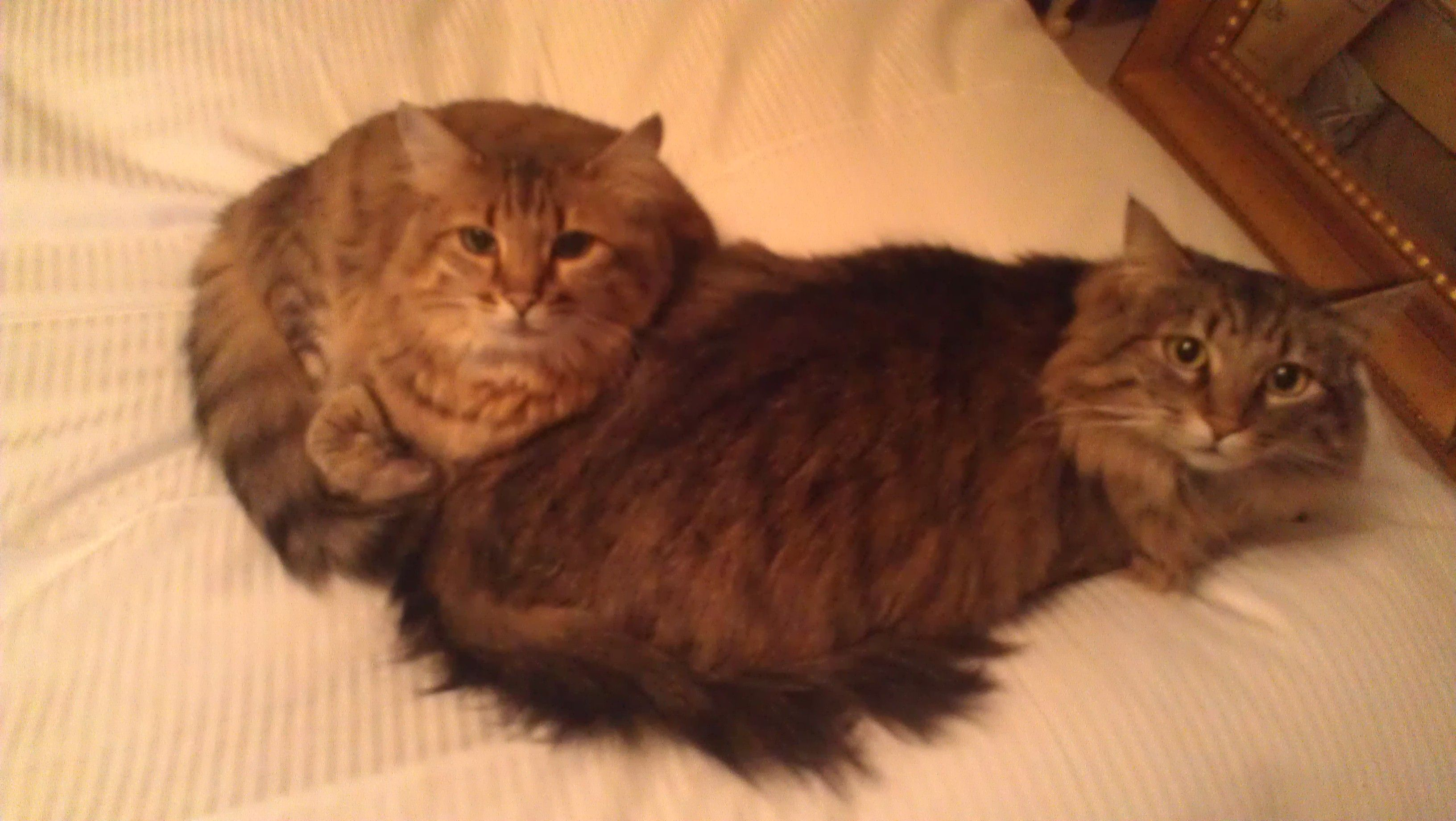 hairy bed fellows